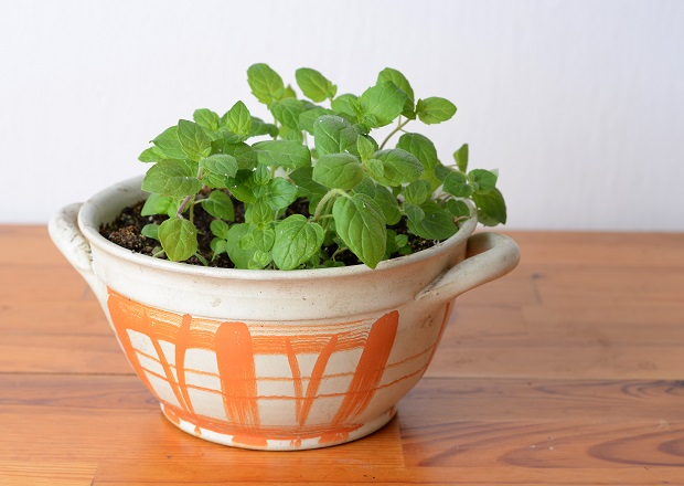 The Best Indoor Herb Garden Kits