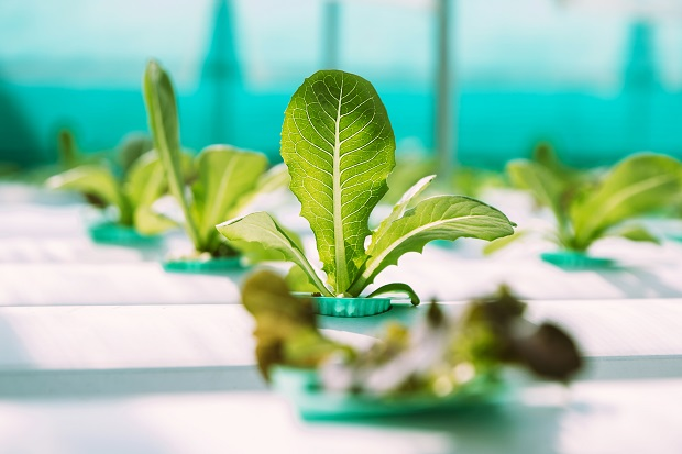 Why Is Hydroponic Vegetable Gardening SoPopular?
