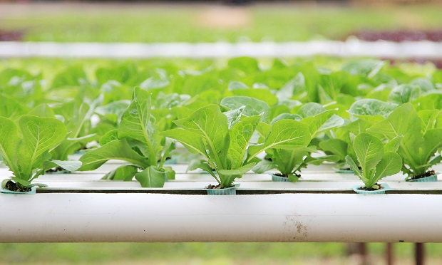 Hydroponic Vs Traditional Gardening – Which Is Better?
